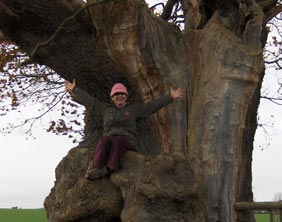 Portia Howe on the tree which is thought to be oldest in Lichfield district – an Oak in Colton that started growing around 1480