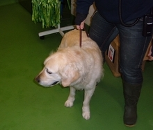 The dog found in Shenstone on January 15