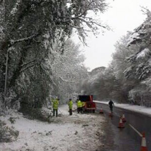 Workers checking trees overhanging the A51