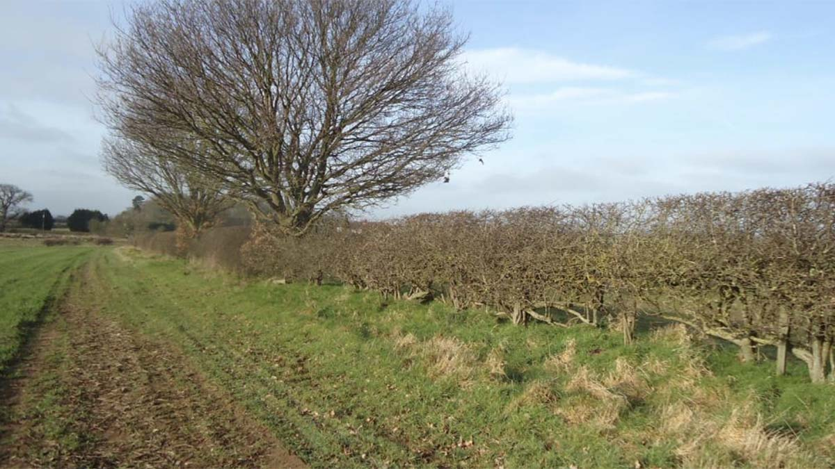 Part of the hedgerow at risk. Picture: Lichfield District Council planning portal
