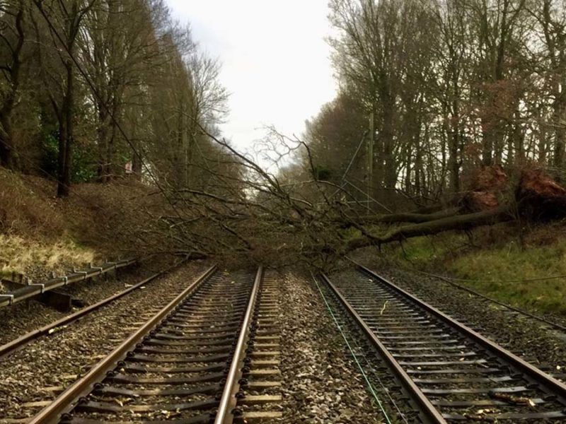 A tree blown on to the line during Storm Ciara
