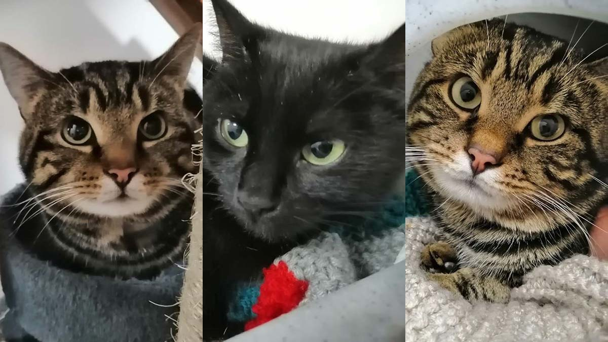 The three cats looking for a new home
