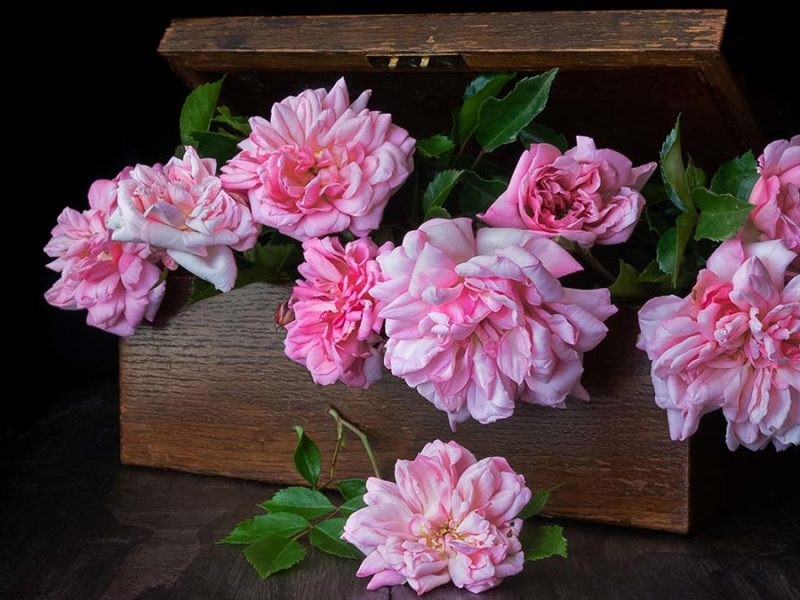 Box of Roses -Anne Anderson