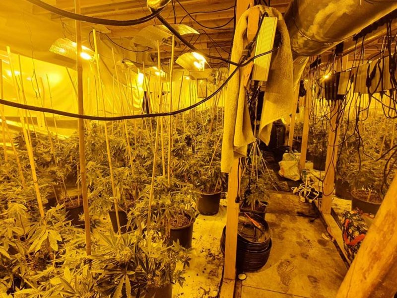 The cannabis farm uncovered by police in Armitage