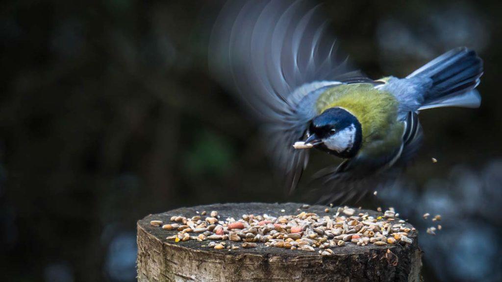 Flying Visit - Richard Moore