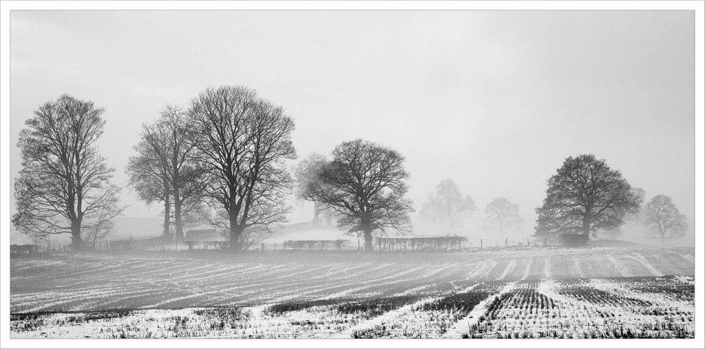 Winters Morning - Darron Matthews