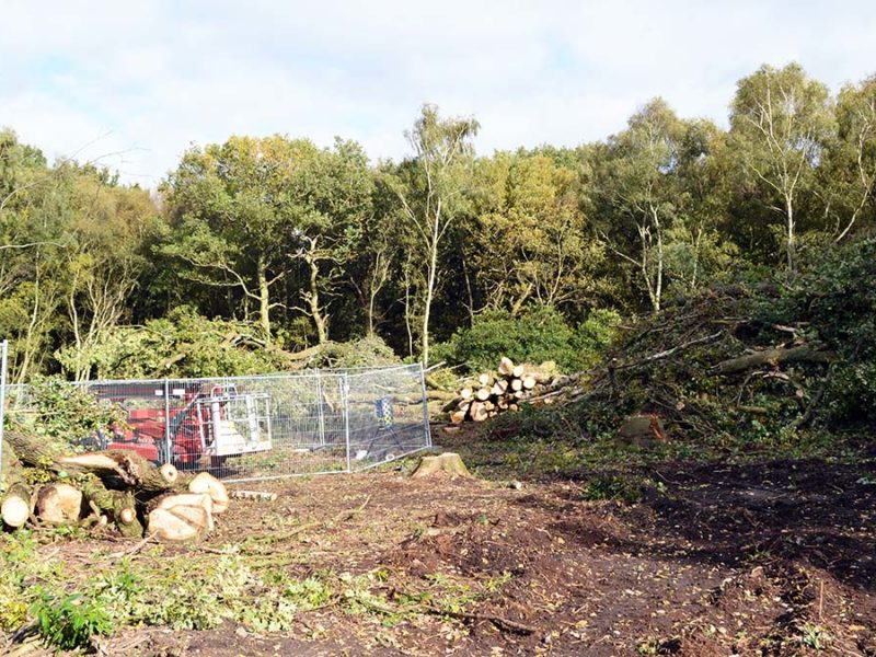 One of the areas of woodland where HS2 preparatory work is taking place