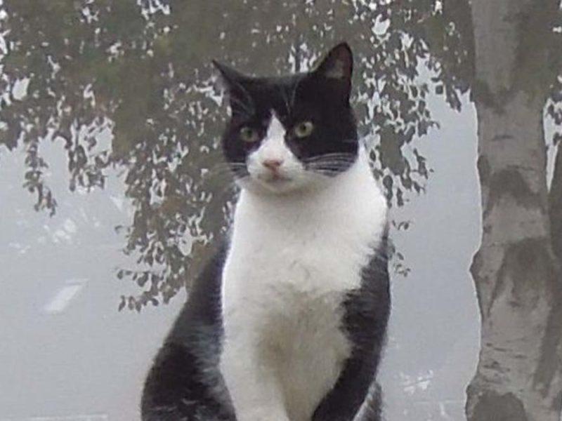 Pefki the cat