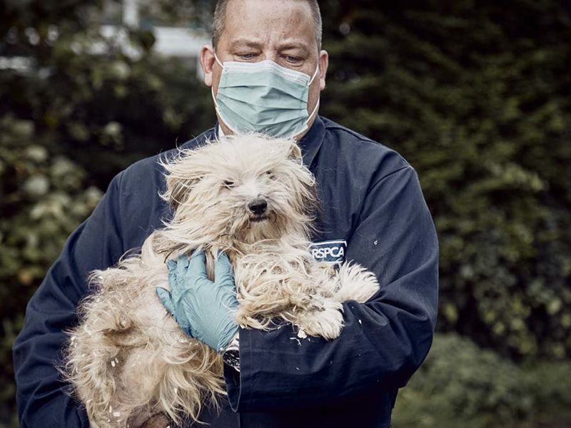 An RSPCA inspector with an animal