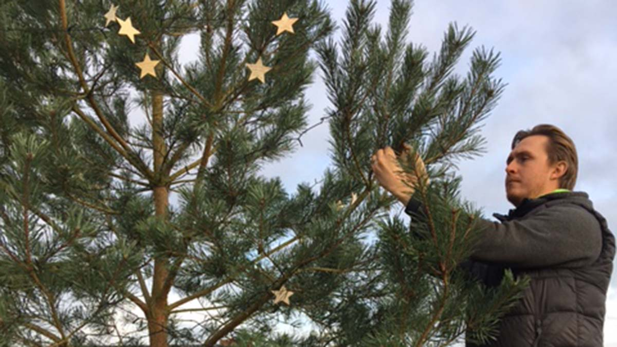 The stars of remembrance being placed on the Christmas tree