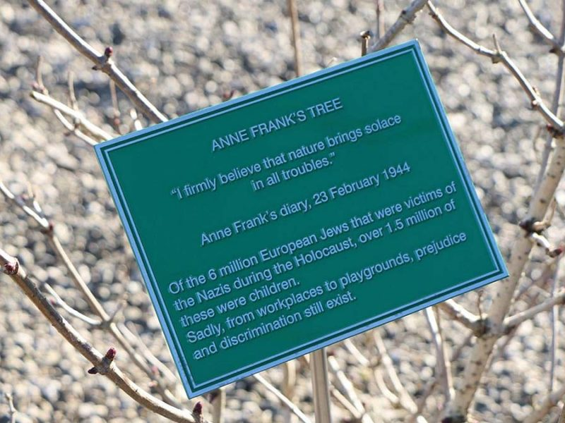 The plaque on the Anne Frank Tree at National Memorial Arboretum