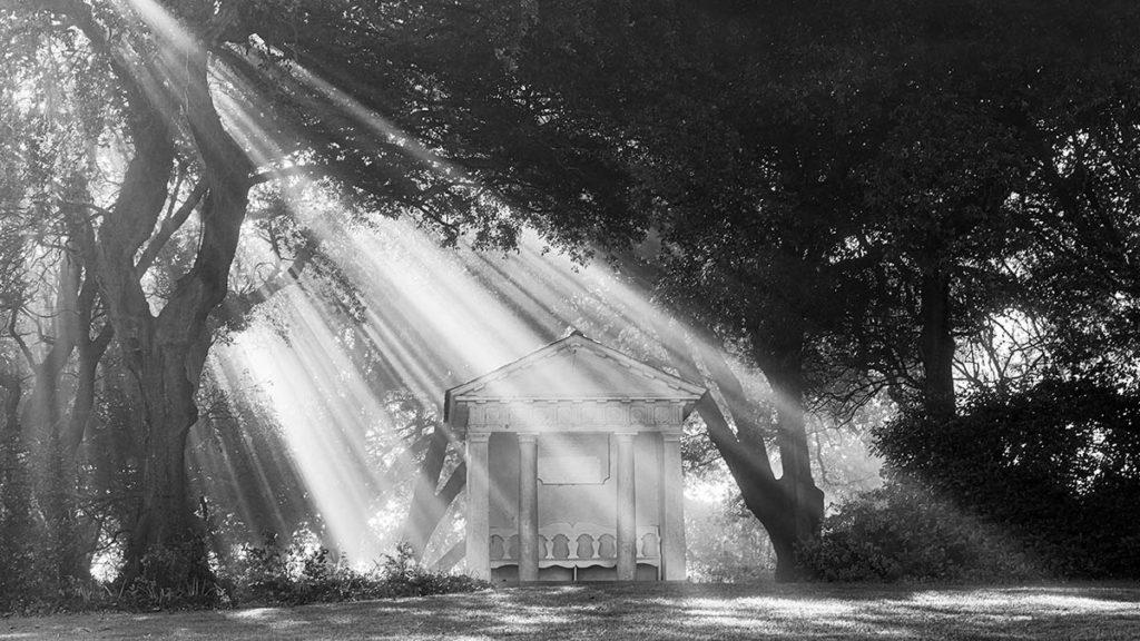 Morning Light - Bill D'Arcy