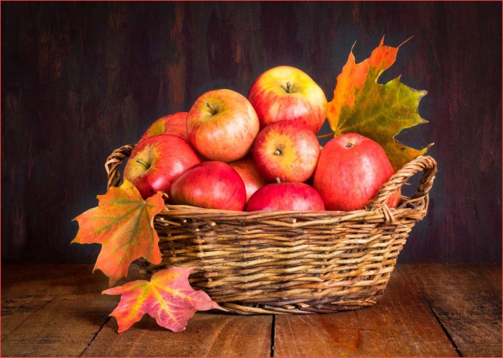 Apple Harvest by Sandra Morgan