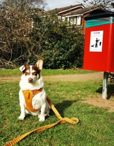 Woody the dog at the new poo bin