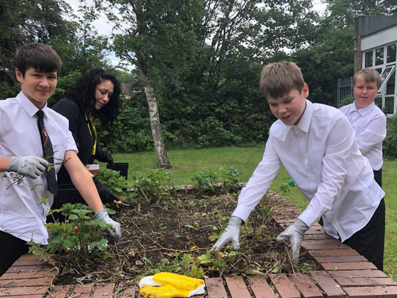 Pupils working on the allotments area