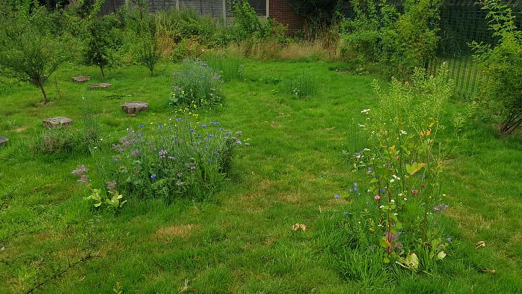A wildflower area at Curborough Community Centre