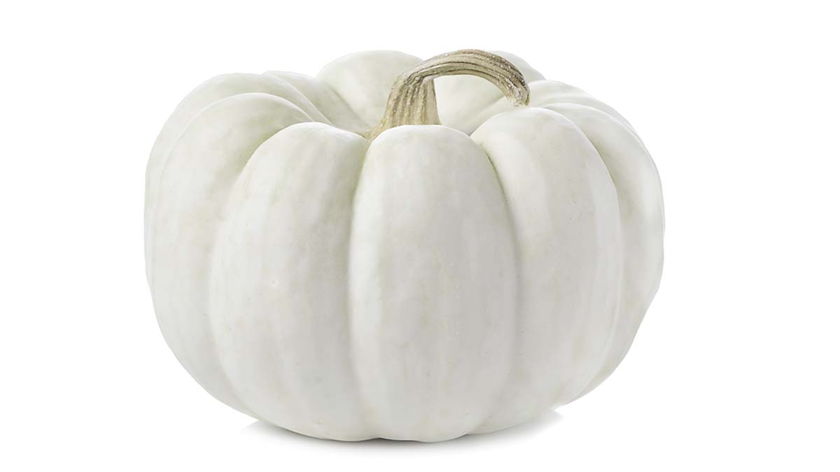 One of the 'ghost' pumpkins